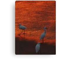 sunset in a paradise - puesta del sol en un paraiso Canvas Print