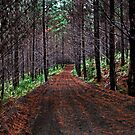 Trailblazing Through Woodhill Forest by Robyn Carter