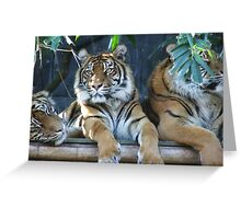Tigers tiger Greeting Card