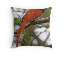 Paradise Flycatcher demonstrating long tail Throw Pillow