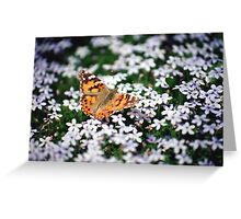 Butterfly on Blue Star Creeper Greeting Card