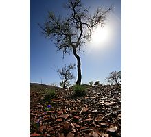 Regrowth, Pilbara Photographic Print