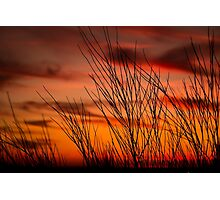 Orange sky with branches Photographic Print