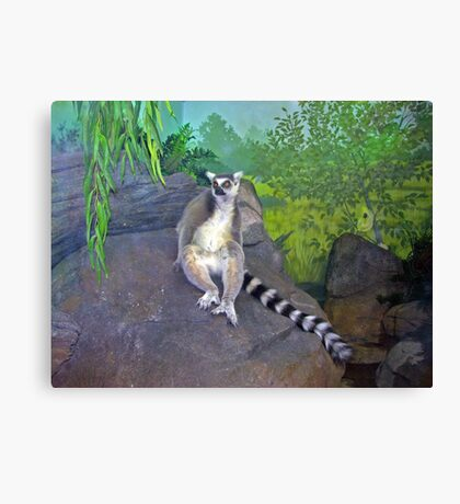 One Cool Lemur Canvas Print
