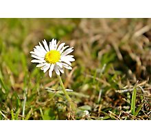 Close Daisy A Photographic Print