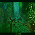 Dark forest by Maylock
