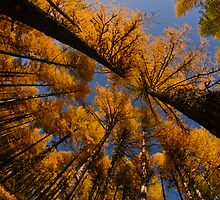 Larch by Nick Johnson