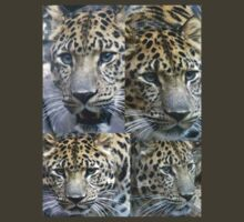 Elegant Faces by Nichole Schoff