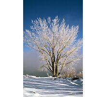 Topaz Winter Photographic Print