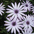 Purple Daisy by LoopGoose