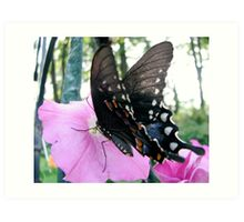 Tiger Swallowtail 2 Art Print