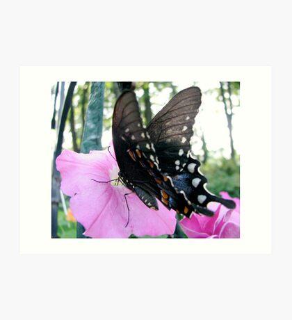 Tiger Swallowtail 2 Art Print
