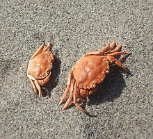 Baby Crabs by LadyHeather