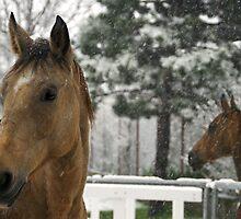 horses in the snow by Dan Shalloe