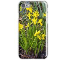Tiny Narcissus A iPhone Case/Skin