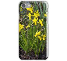 Tiny Narcissus B iPhone Case/Skin