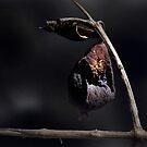 Dried Guava by Carlo Cesar Rodillas