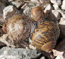 She Sells Snail Shells....? by Molmon