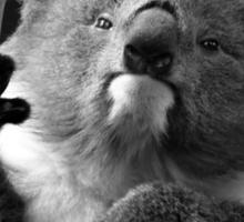 Koala 1 B&W Sticker