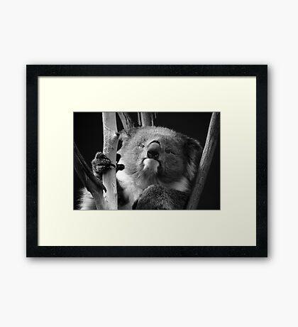 Koala 1 B&W Framed Print