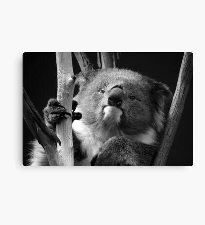 Koala 1 B&W Canvas Print
