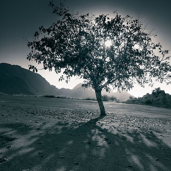 Shiny Little Tree by Tony Elieh