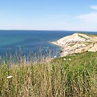 Ocean view in Martha's Vineyard, MA  by Nicole Chambers