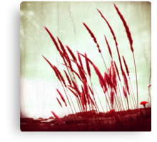 Morning Glow red Canvas Print