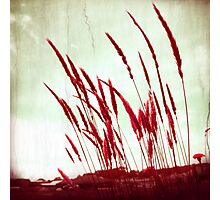 Morning Glow red Photographic Print