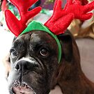 Reindeer This Year?...... Anything For That Cookie! by Evita