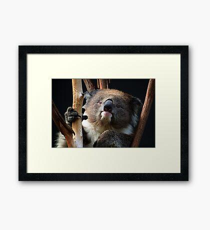 Koala 1 Framed Print