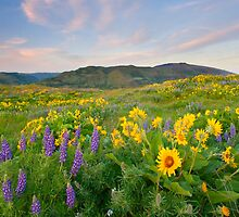 Meadow of Spring by DawsonImages