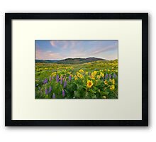 Meadow of Spring Framed Print