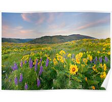 Meadow of Spring Poster