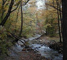 The Stream by labiosa