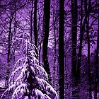 Lavender Winter by jlynn