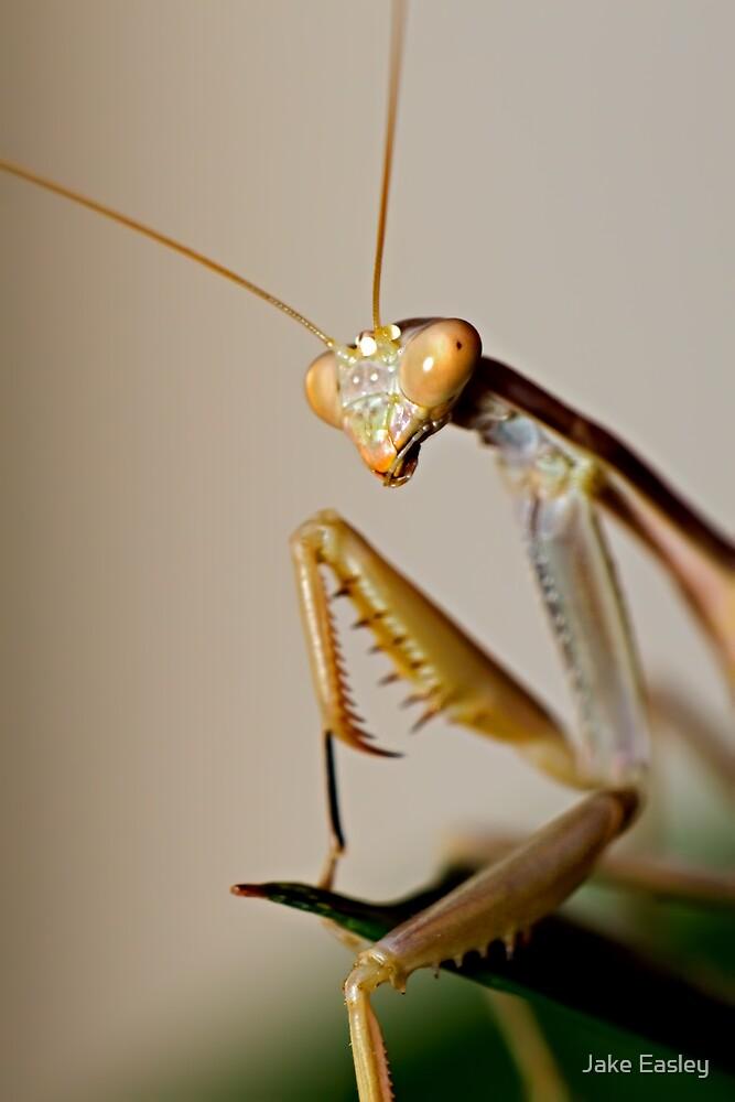 Mantis Profile by Jake Easley