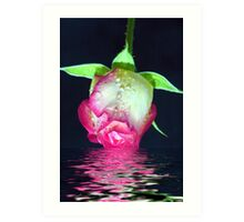 Rose Dip Art Print