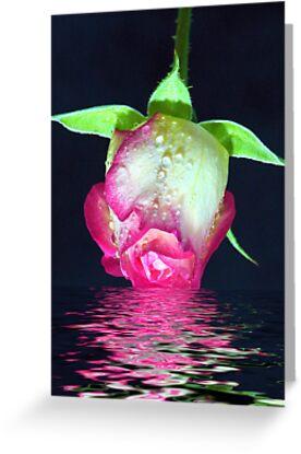 Rose Dip by ~ Fir Mamat ~