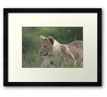 Stalk and Pounce! Its the big game now! Framed Print