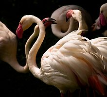 Flamingos  by Dan Davies