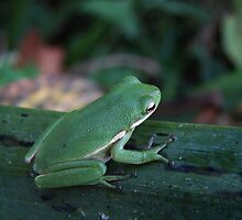 FROG MORNING by RDRAKEPERKINSON