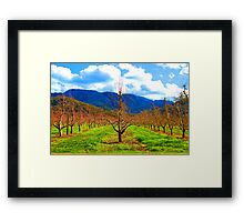 Natural Lines - Buckland Valley, Victoria Australia Framed Print