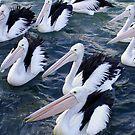 Pelicans by Cheryl  Mason