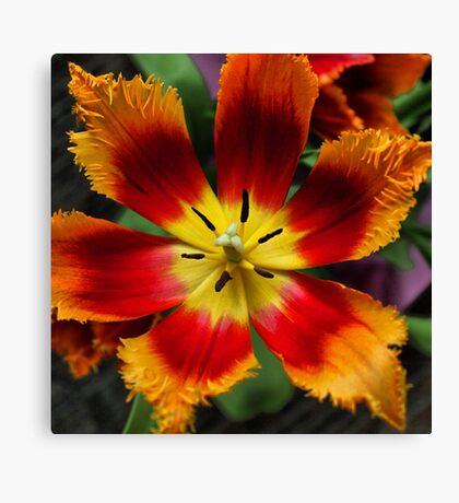 Tie dye bloom Canvas Print