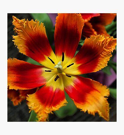 Tie dye bloom Photographic Print