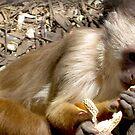 Monkey by Cheryl  Mason