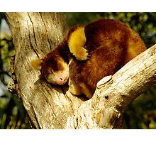 Sleepy Chappy. Photographic Print