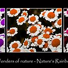 Wonders of Nature - Nature's Rainbow 2 by Ben Shaw