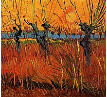 Vincent van Gogh, Willows at Sunset.  Photographic Print